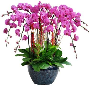 9 dallı mor orkide  Adıyaman 14 şubat sevgililer günü çiçek
