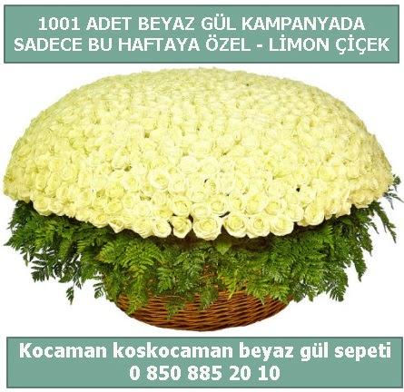 1001 adet beyaz gül sepeti özel kampanyada  Adıyaman çiçek gönderme sitemiz güvenlidir