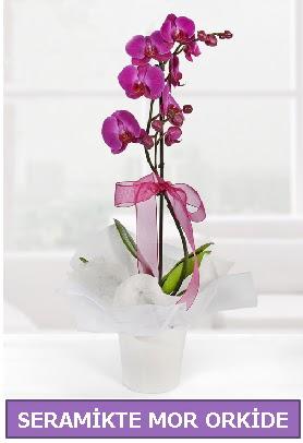 Seramik içerisinde birinci kalite tek dallı mor orkide  Adıyaman İnternetten çiçek siparişi