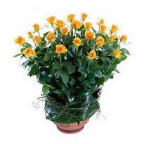 Adıyaman cicekciler , cicek siparisi  10 adet sari gül tanzim cam yada mika vazoda çiçek