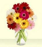 Adıyaman çiçek yolla , çiçek gönder , çiçekçi   cam yada mika vazoda 15 özel gerbera