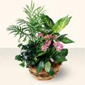 Adıyaman çiçek satışı  5 adet canli çiçek sepette