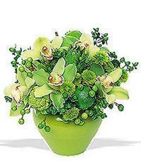 cam yada mika vazoda 5 adet orkide   Adıyaman online çiçekçi , çiçek siparişi