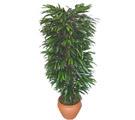 Adıyaman çiçek siparişi sitesi  Özel Mango 1,75 cm yüksekliginde