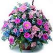 karisik mevsim kir çiçekleri  Adıyaman çiçek gönderme sitemiz güvenlidir
