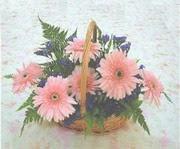 gerbera çiçeklerinde sepet   Adıyaman çiçek yolla