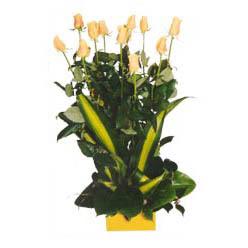12 adet beyaz gül aranjmani  Adıyaman kaliteli taze ve ucuz çiçekler