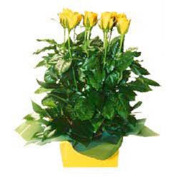 11 adet sari gül aranjmani  Adıyaman online çiçekçi , çiçek siparişi