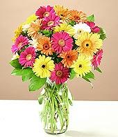 Adıyaman çiçek online çiçek siparişi  17 adet karisik gerbera