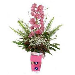 Adıyaman hediye çiçek yolla  cam yada mika vazo içerisinde tek dal orkide çiçegi