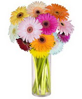 Adıyaman internetten çiçek siparişi  Farkli renklerde 15 adet gerbera çiçegi