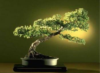 ithal bonsai saksi çiçegi  Adıyaman çiçekçi mağazası