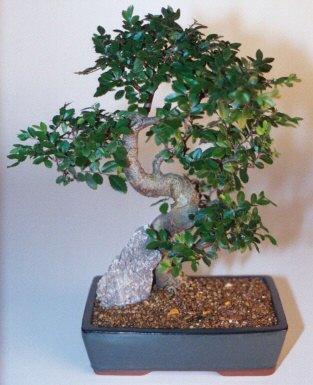 Adıyaman çiçek gönderme sitemiz güvenlidir  ithal bonsai saksi çiçegi  Adıyaman çiçek siparişi sitesi
