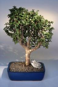 Adıyaman çiçek gönderme  ithal bonsai saksi çiçegi  Adıyaman çiçekçiler