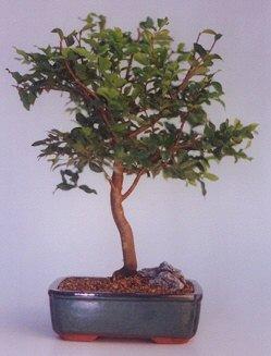 Adıyaman ucuz çiçek gönder  ithal bonsai saksi çiçegi  Adıyaman anneler günü çiçek yolla