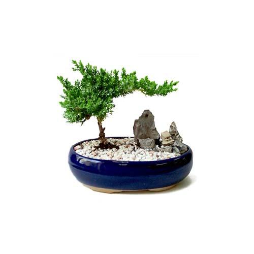 ithal bonsai saksi çiçegi  Adıyaman çiçek gönderme