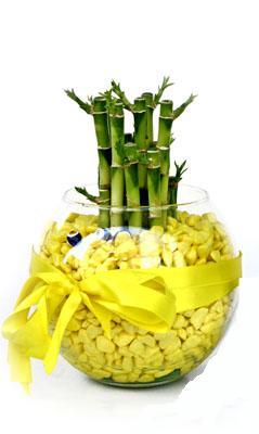 cam fanus içerisinde bambo  Adıyaman internetten çiçek satışı