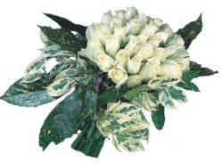 Adıyaman internetten çiçek siparişi  9 Beyaz gül Özel kisiler için