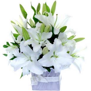 Adıyaman çiçek yolla  2 dal cazablanca vazo çiçeği
