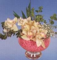 Adıyaman çiçek mağazası , çiçekçi adresleri  Dal orkide kalite bir hediye