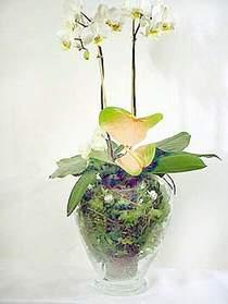 Adıyaman çiçek satışı  Cam yada mika vazoda özel orkideler