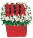 Adıyaman çiçek gönderme  Kare cam yada mika içinde kirmizi güller - anneler günü seçimi özel çiçek