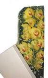 Adıyaman çiçek gönderme  Kutu içerisine dal cymbidium orkide