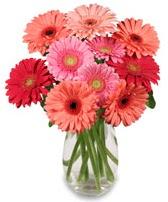 vazo içerisinde 13 adet gerbera çiçeği  Adıyaman çiçek siparişi sitesi