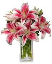 Vazo içerisinde 5 dal kazablanka çiçeği  Adıyaman cicekciler , cicek siparisi