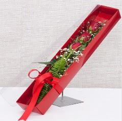 Kutu içerisinde 3 adet kırmızı gül  Adıyaman online çiçek gönderme sipariş