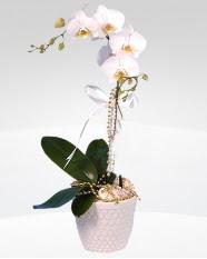 1 dallı orkide saksı çiçeği  Adıyaman online çiçekçi , çiçek siparişi