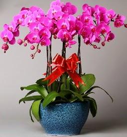 7 dallı mor orkide  Adıyaman çiçek online çiçek siparişi