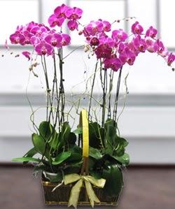 4 dallı mor orkide  Adıyaman güvenli kaliteli hızlı çiçek
