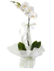 1 dal beyaz orkide çiçeği  Adıyaman çiçek siparişi vermek