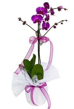Tek dallı mor orkide  Adıyaman çiçekçi telefonları