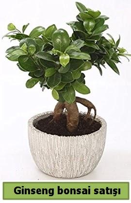 Ginseng bonsai japon ağacı satışı  Adıyaman çiçekçi telefonları