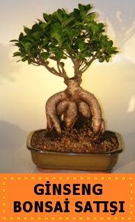 Ginseng bonsai satışı japon ağacı  Adıyaman cicek , cicekci