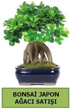 Bonsai japon ağacı satışı  Adıyaman çiçek satışı