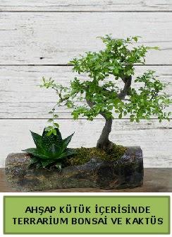 Ahşap kütük bonsai kaktüs teraryum  Adıyaman internetten çiçek siparişi