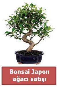 Japon ağacı bonsai satışı  Adıyaman çiçek siparişi sitesi
