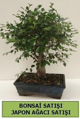 Minyatür bonsai japon ağacı satışı  Adıyaman çiçek gönderme sitemiz güvenlidir