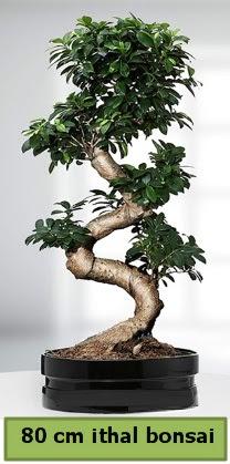 80 cm özel saksıda bonsai bitkisi  Adıyaman çiçekçi telefonları