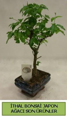 İthal bonsai japon ağacı bitkisi  Adıyaman hediye sevgilime hediye çiçek