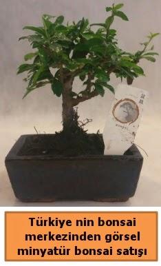 Japon ağacı bonsai satışı ithal görsel  Adıyaman çiçek yolla