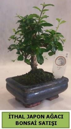 İthal japon ağacı bonsai bitkisi satışı  Adıyaman çiçekçi telefonları