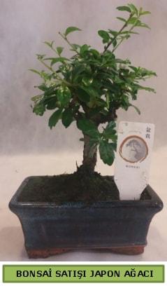 Minyatür bonsai ağacı satışı  Adıyaman çiçek gönderme