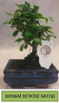Bonsai ithal görsel minyatür japon ağacı  Adıyaman ucuz çiçek gönder
