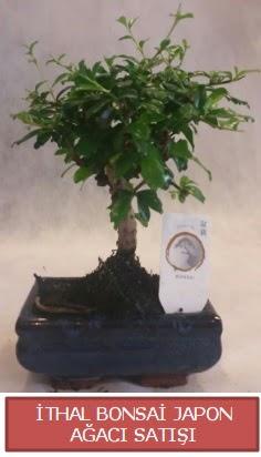 İthal küçük boy minyatür bonsai ağaç bitkisi  Adıyaman çiçekçi telefonları