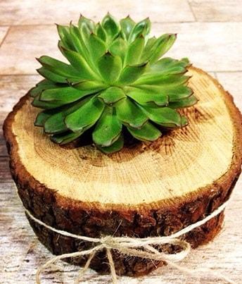 Doğal kütük içerisinde sukulent kaktüs  Adıyaman çiçek satışı