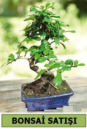 Çam bonsai japon ağacı satışı  Adıyaman çiçek satışı